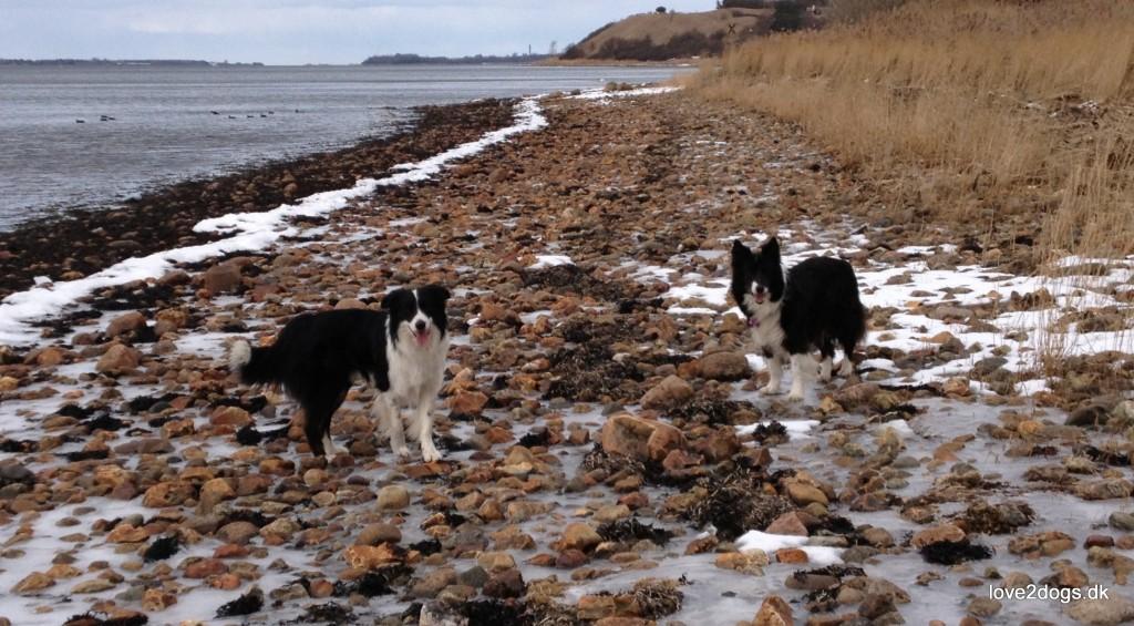 Gåtur langs stranden, nedenfor Ejby Ådals skrænter.
