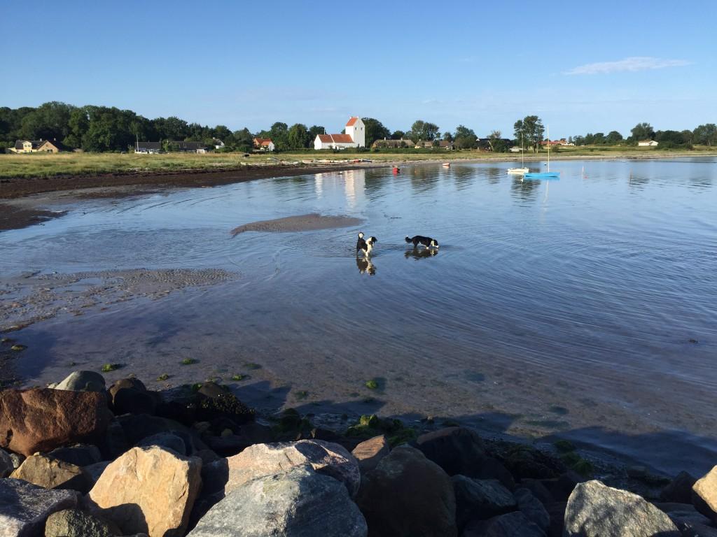 Morgenlufte-tisse-prutte-tur. Hundene er ikke til at holde oppe af vandet. Så snart de bliver sluppet fri af linerne, så piiiiiuuuun, står de i vandkanten og løber rundt og pjatter.