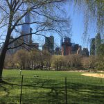 New York – Central Park og Sigthseeing