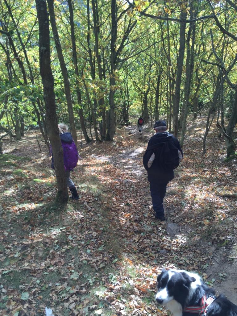 Gul rute igennem skoven