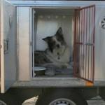 >3 hunde på besøg
