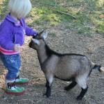 >På besøg hos Orø Strand Zoo
