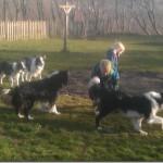 Påskevejr og hundetræning