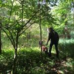 Søndagsskovtur