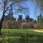New York – Central Park og Sigthseeing